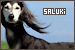 Dog Breeds: Saluki
