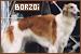 Dog Breeds: Borzoi