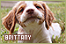 Dog Breeds: Brittany